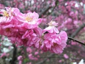 春天使用什么香薰?