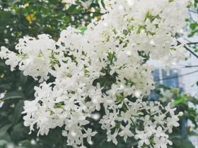 春天在每个枝头都有自己的花朵!
